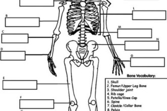 3 human skeleton 3d : Biological Science Picture Directory