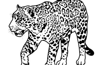 forest animals coloring pages : Biological Science Picture