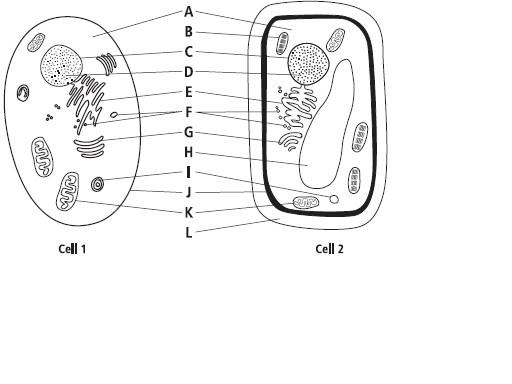 eye labeling diagram quiz 1jz alternator wiring general data parts of the cell rh 12 yoga neuwied de diaphram