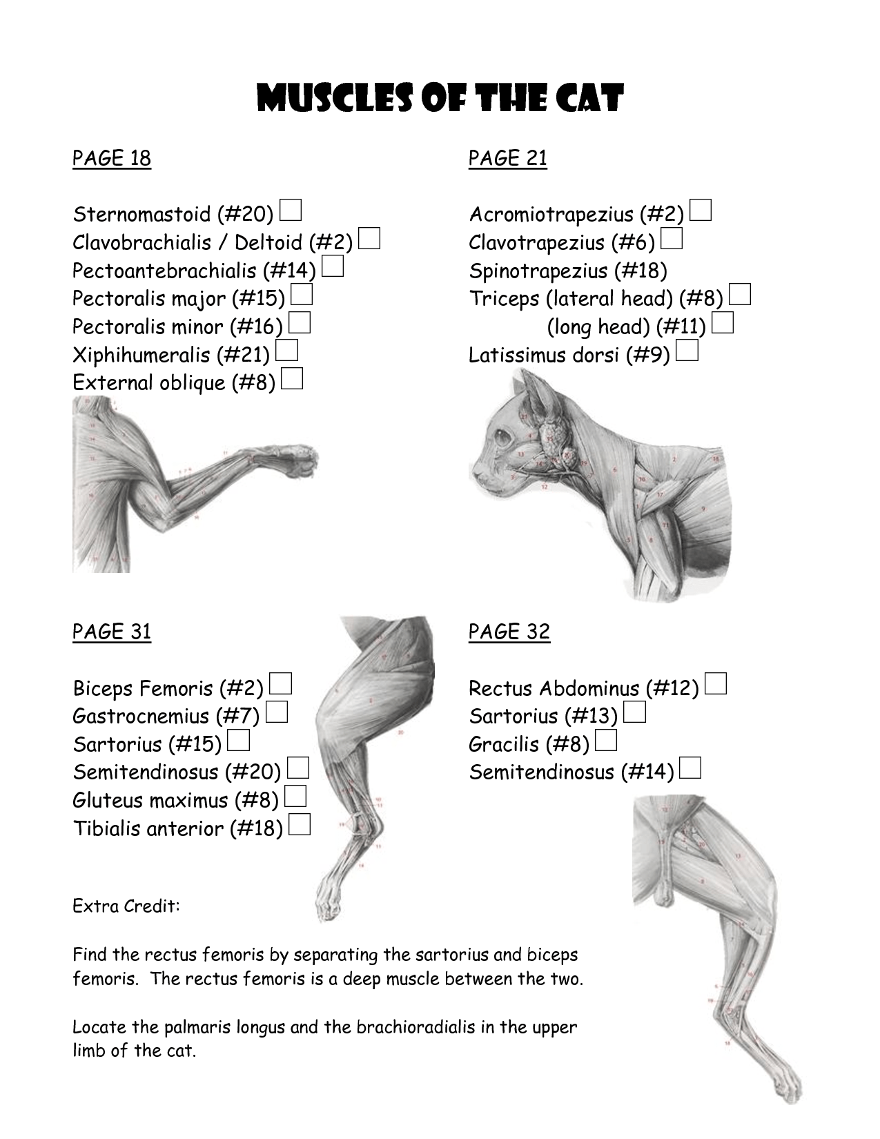 cat muscle work template : Biological Science Picture