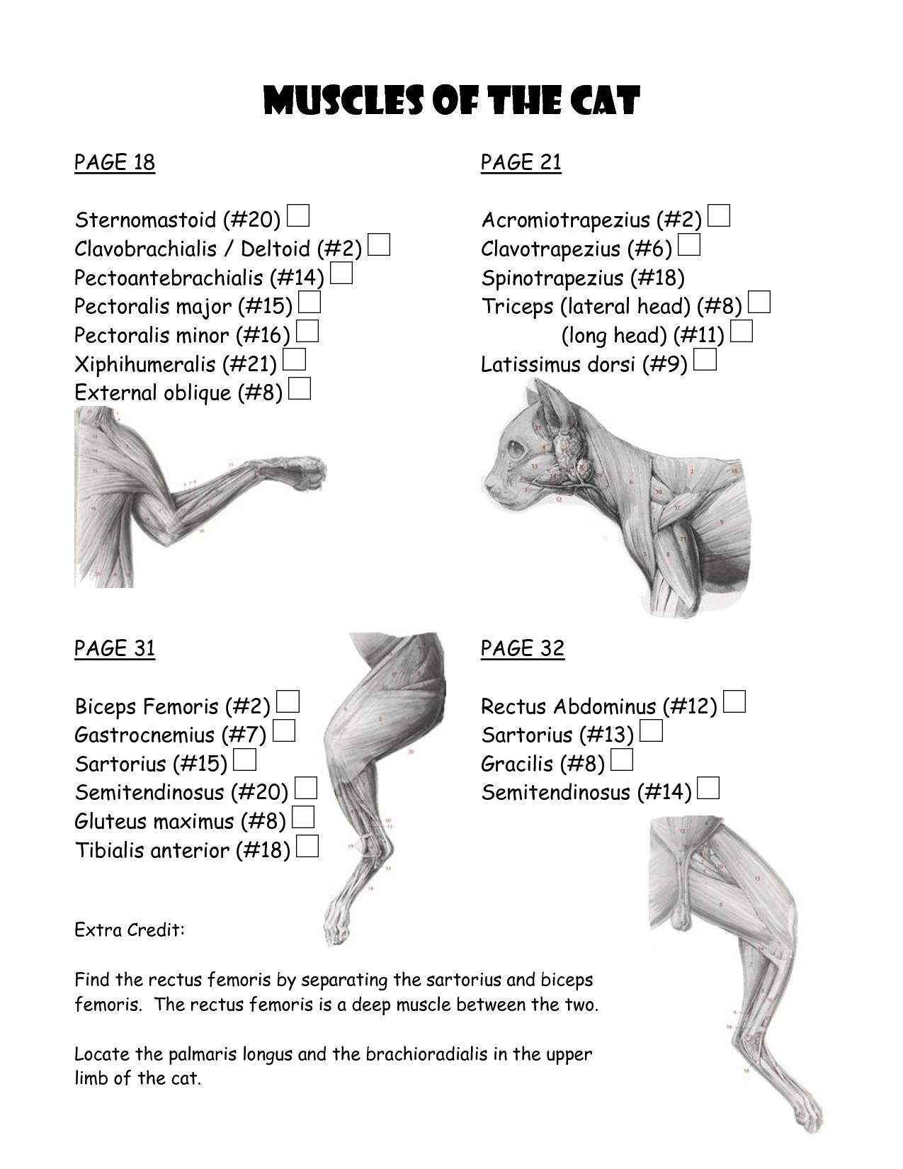 cat muscle anatomy diagram car towing socket wiring work template 5