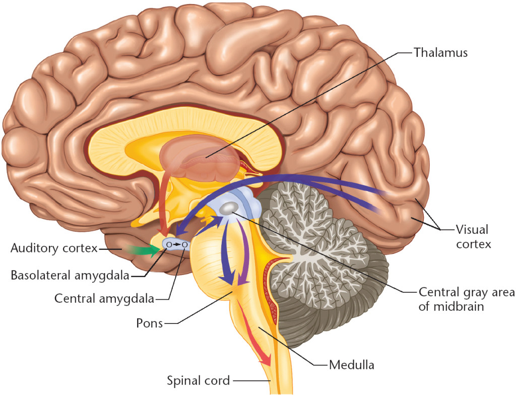 brain cross section diagram electrical wiring of a house the human parts 5 7
