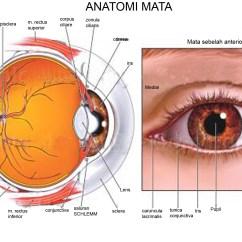 Canine Eye Diagram Polaris Wiring Sportsman 500 Human Graphics 6 Eyes Anatomy Worksheet