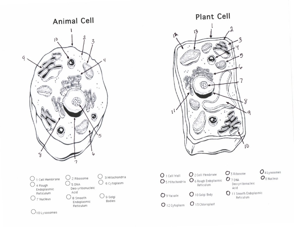 plant and animal cells diagram quiz : Biological Science
