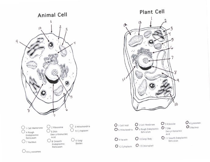 Cell 6 Animal And Plant Quiz Cells Diagram