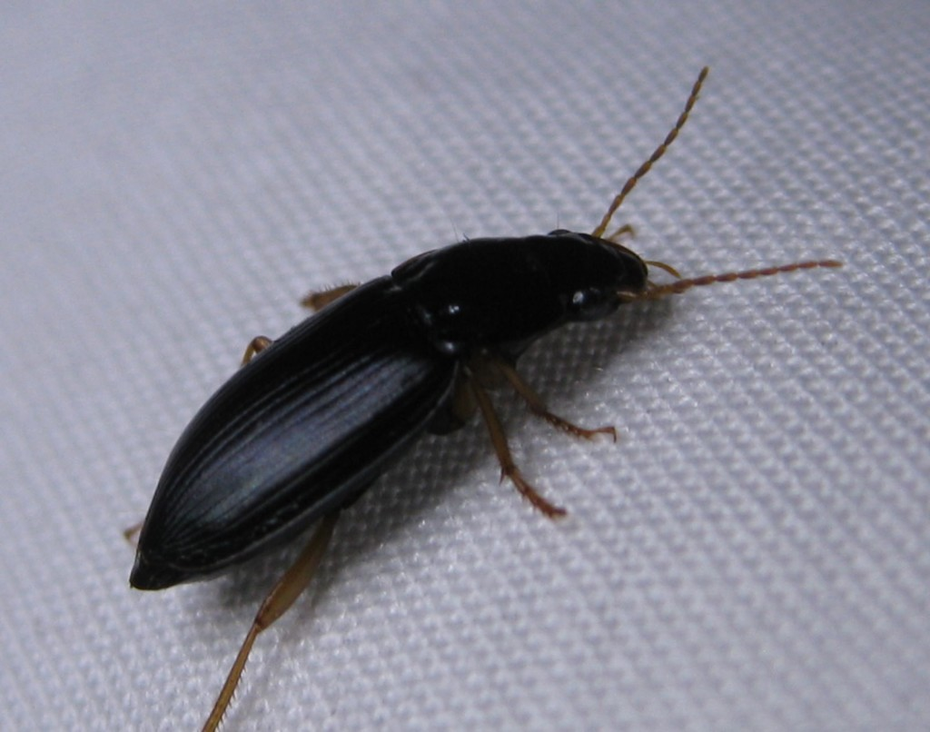 small beetles : Biological Science Picture Directory ...