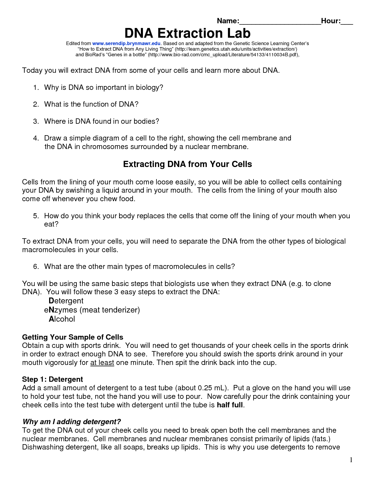 Dna Isolation Worksheet Middle School Dna Best Free