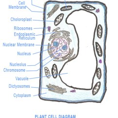 Cat Skeleton Diagram Labeled Dodge Radio Wiring Diagrams Plant Cell Model Project Kids : 5 Activities For   Biological Science Picture ...