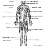 8 physiology class : Biological Science Picture Directory