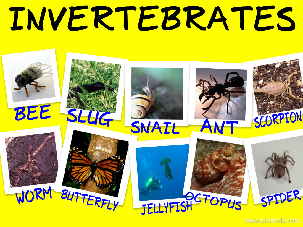 Examples Of Invertebrates Biological Science Picture