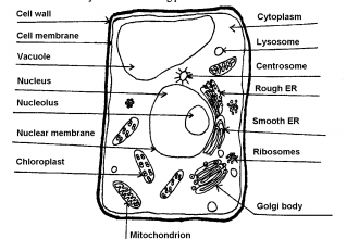 how to draw stem and leaf diagram fujitsu ten stereo wiring 3 unlabeled plant cell pictures in - biological science picture directory pulpbits.net