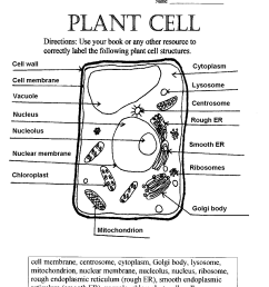 35 Plant Cell Worksheets To Label - Labels Database 2020 [ 1497 x 1200 Pixel ]