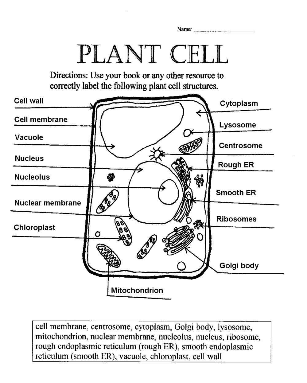 medium resolution of 35 Plant Cell Worksheets To Label - Labels Database 2020
