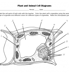 plant cell diagram labeled worksheet photo 26 [ 1024 x 791 Pixel ]