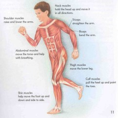 Muscular System Diagram Without Labels John Deere Model A Wiring 6 Pictures Labeled In Muscles Biological
