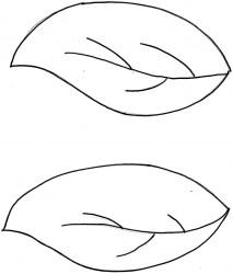 template leaves leaf printable pulpbits science