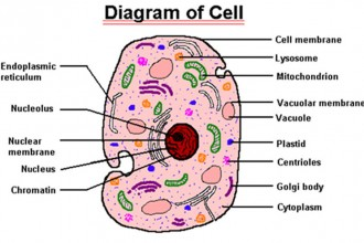 parts of a cell diagram led wiring 9v copy lessons tes teach