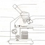 5 parts of the microscope quiz : Biological Science