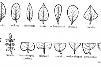 Tree Leaf Names : Biological Science Picture Directory