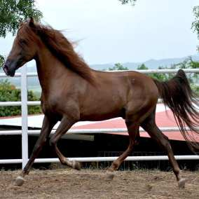 "<span class=""live-editor-title live-editor-title-21083"" data-post-id=""21083"" data-post-date=""2015-12-23 12:13:53"">Caballo pasuco, a diestra y siniestra</span>"