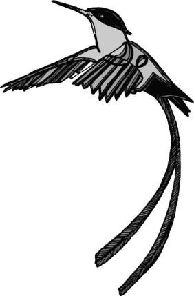 hummingbirdissue7