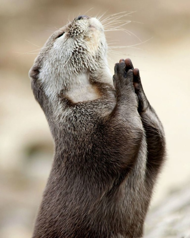 PLEAS GOD, LET IT BE SPRING NOW