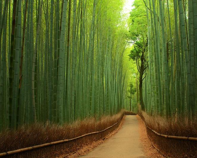 13 - Bamboo Path in Kyoto Japan