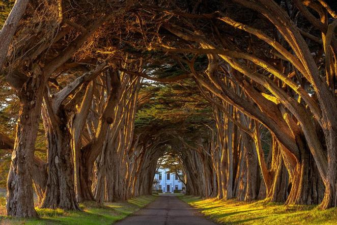 23 - Cypress Tree Tunnel At The Historic Marconi Wireless Station California
