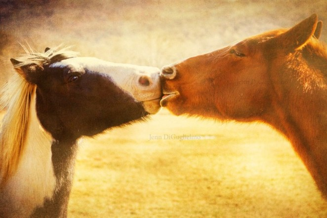 16 Beautiful Photos That Prove Animals Kiss Too