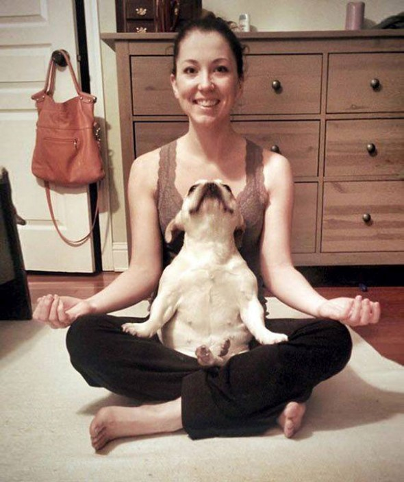 Funny Animals Doing Yoga 4