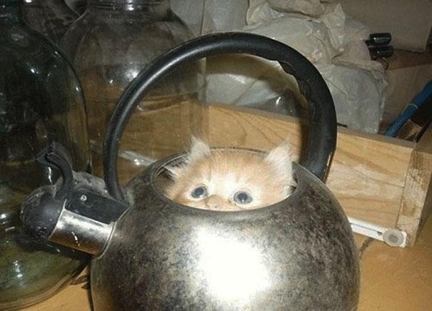 funny-cats-if-it-fits-i-sits-17