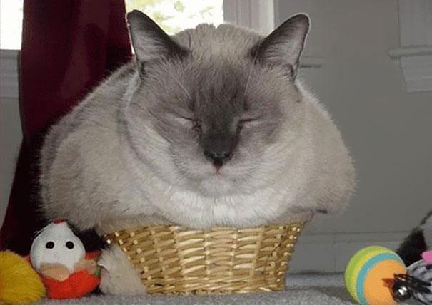 funny-cats-if-it-fits-i-sits-7