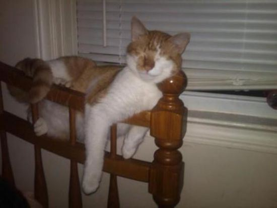 29 Photos Of Cats Sleeping In The Weirdest Places And Positions-8549