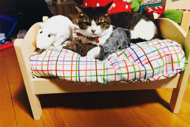 Japanese Pet Owners Transform Ikea Doll Beds Into Pet