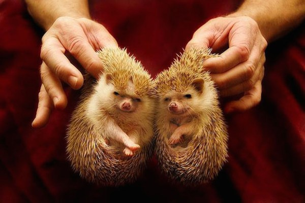 cute-animals-twins-16