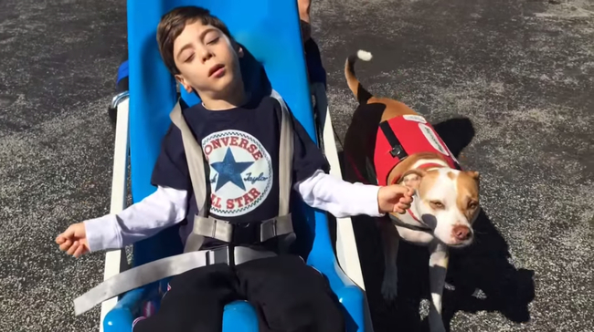 Boy And Pit Bull Duo Battle To Remain Together After