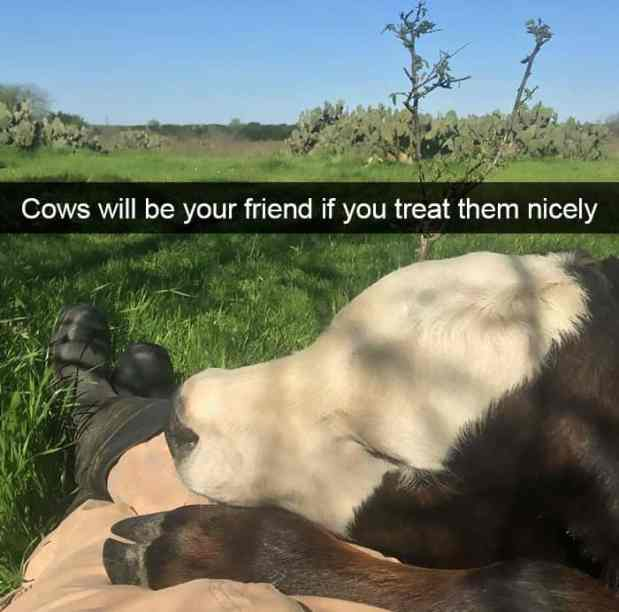 animal snapchats 10 587f66f737e31  700 - Just 23 Hilarious Animal Snapchats So You Can Start Your Week With A Smile