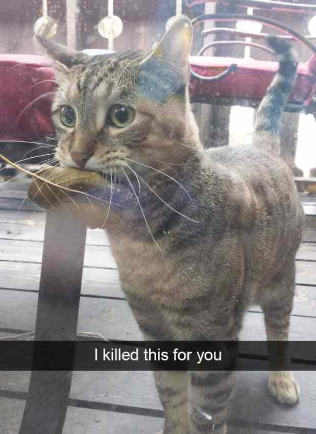 animal snapchats 56 5881c108bd11a  700 - Just 23 Hilarious Animal Snapchats So You Can Start Your Week With A Smile