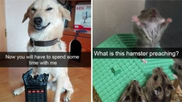 This Hilariously Horrifying Story Explains Why A Roomba And Dog Poop