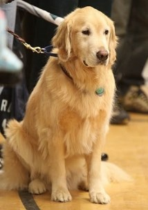 Therapy Dog Training Seattle