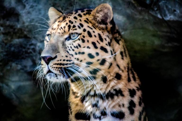 Win Free Tickets to the Central Florida Zoo!