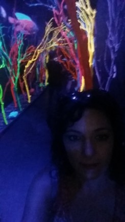 meow wolf 1