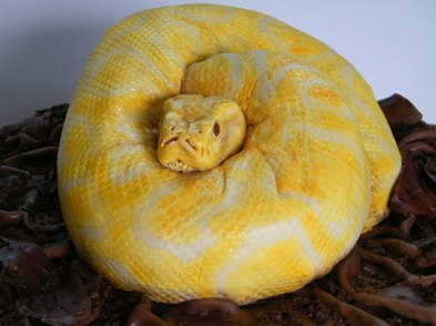 #4 Snake Cake