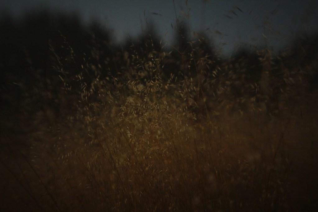 leavesofgrass.helzer