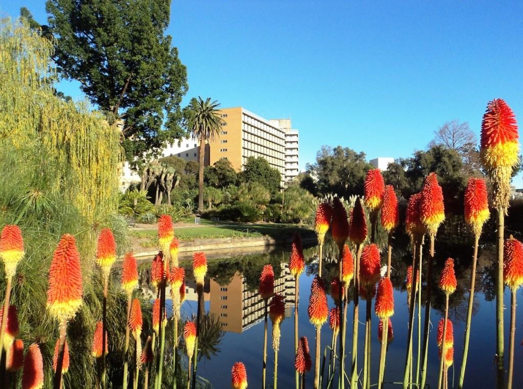 A Therapeutic Garden Leach