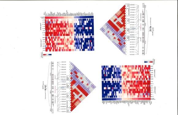 Blum Data Art