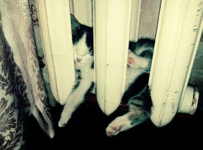 Кошки на батарее (14)
