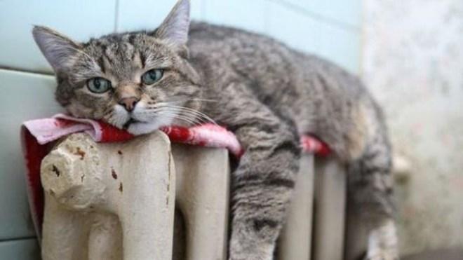 Кошки на батарее (3)