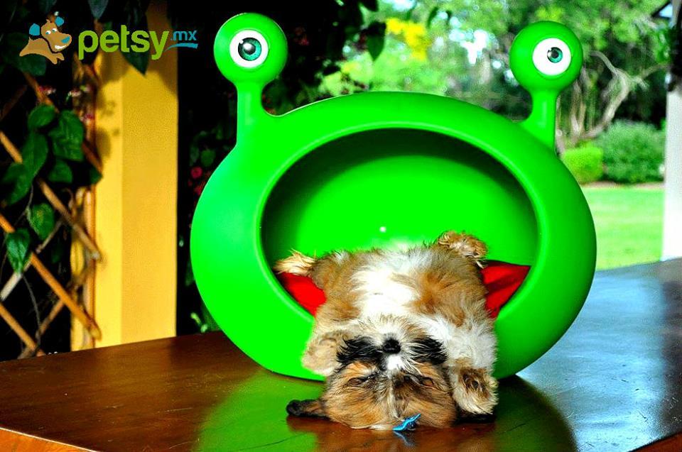 petsy2