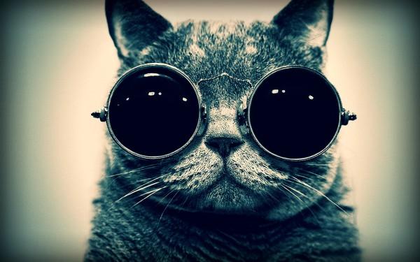 cat_eyes_glasses